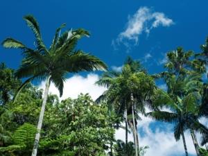 Australie vakantie, Carins botanische tuin